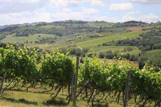 Tuscany Wine Trail - Vineyards